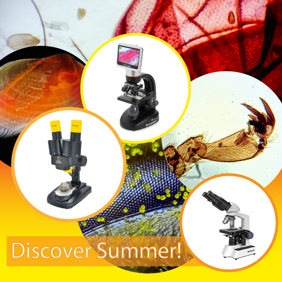 Discover summer